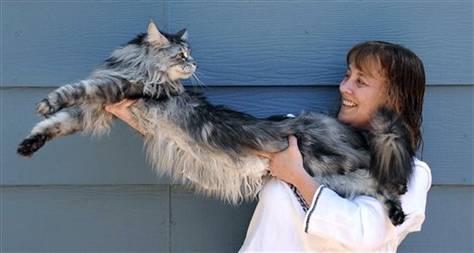 Longest_cat